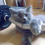 corpsfit.fr, #corpsfit [Corps Fit] Site, blogue fitness spécialisé dans la musculation - Kerim Yilmaz, blogueur muscu